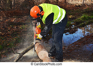 wood cutting in forest - lumberjack during work in forest...