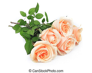 Beautiful roses  - Bouquet of roses on a white background