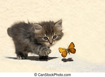 hunting kitten - very young kitten hunting a butterfly