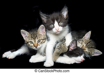 Young Domestic Cats Cutout
