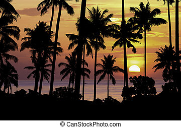 silhouette coconut tree at sunset