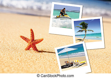 sea starfish and pics - sea, starfish, sea outdoor with...