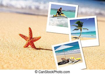 sea starfish and pics - sea, starfish, sea outdoor with...