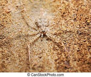 good camouflage - a twin tailed spider camouflaged on the...