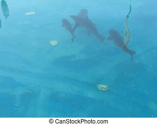 big fish in blue water, moving - big fish in blue water,...