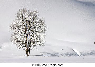 winter lonelyness - lonely tree in the snow
