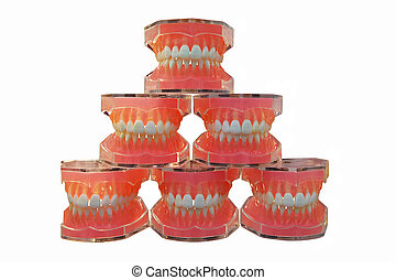 Dental jaws - models of a jaw of the person for training in...