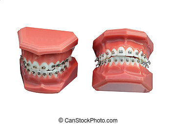 Dental jaws - models of a jaw of the person for training of...
