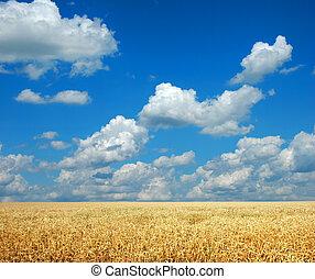 小麥, 天空