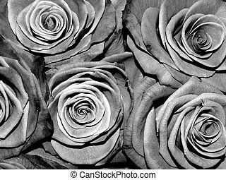 Black and white roses, monochrome, background