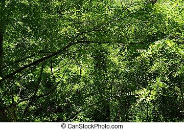 Wald - dichter Bl?tterwald