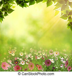 Misty meadow. Abstract natural backgrounds with beauty bokeh