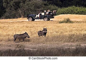 Warthogs in lower zambezi national Park