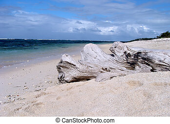 Log on beach in Mauritius