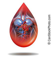 humano, corazón, sangre, gota