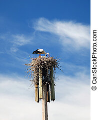 White storks in the nest - A couple of white storks mother...