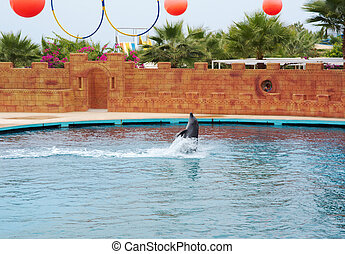 dolphin playing in waterPerformance in dolphinarium