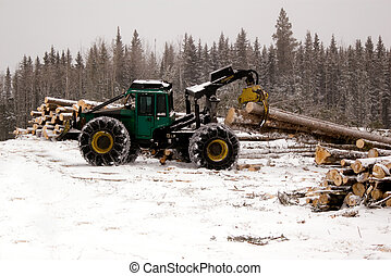 Skidder hauling spruce tree during winter forestry...