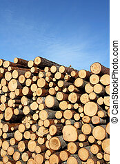 Stack of Wood and Blue Sky