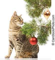 Domestic cat and Christmas tree - Domestic cat sitting next...