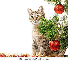 Christmas tree and domestic cat - Domestic cat sitting next...