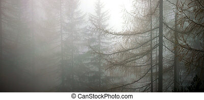 forest in deep fog