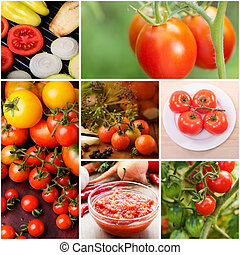 Tomatoes  - Collage of growing tomatoes and food