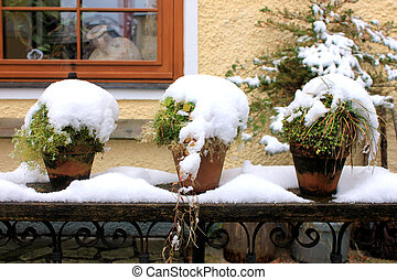 Potted plants with snow - Three potted plants with snow
