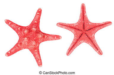 Two red starfishes. Isolated on white background