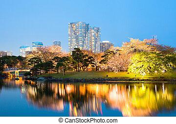 Cherry blossom at Hamarikyu also Hama Rikyu Gardens, Chuo...