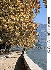 beautiful trees by the lake in ioannina greece