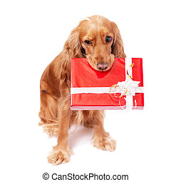 The dog with the present - The nice dog with the present
