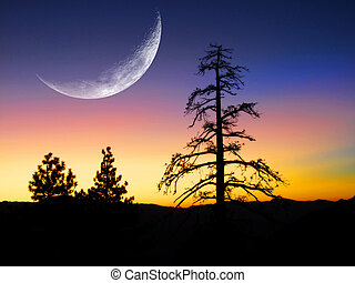 Sunrise in Pine forest - Sunset or sunrise with silhouette...
