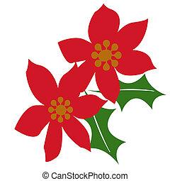 Christmas poinsettia - red poinsettias on white background...