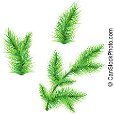 FirTree Branch - Fir-Tree Branch Isolated On White...