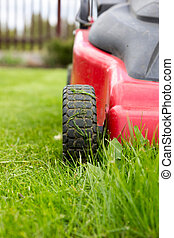 lawnmower. Freshly cut grass by red lawnmower.