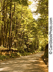 Road in a Forest, Pucon, Chile, South America
