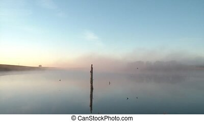 Bird Flies Through Fog Over Water - Bird flies through fog...