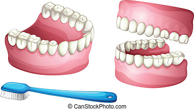 Denture and tooth brush - illustration of denture and tooth...