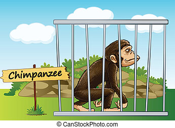 chimpanzee in cage - illustration of a chimpanzee in cage...