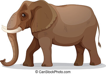 elephant - illustration of an elephant on a white background