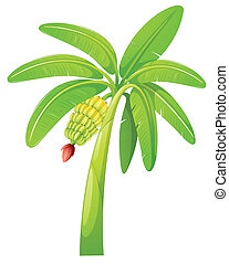 banana tree - illustration of banana tree on a white...