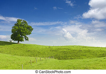 big lime tree, small hut and wooden fence at green hill with...