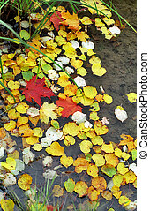 Fallen leaves in water - Fallen red and yellow leaves in...