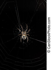 Big spider in its web Night view in a garden
