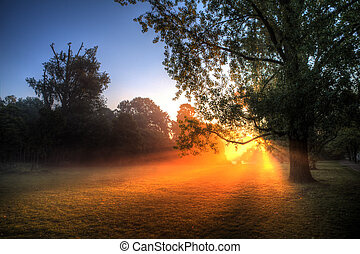 Foggy park sunrise - Early morning sunrise behind the trees...