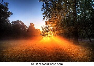 Vondelpark sunburst - Early morning sunrise behind the trees...