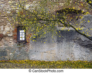 Autumn tree with old wall - Tree with yellow leaves in front...
