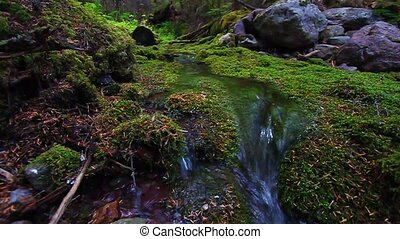 Moss Covered Forest and Strea - Small stream flows through a...