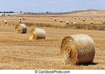 Hay bales - Dozen of hay bales in the country of Apulia,...